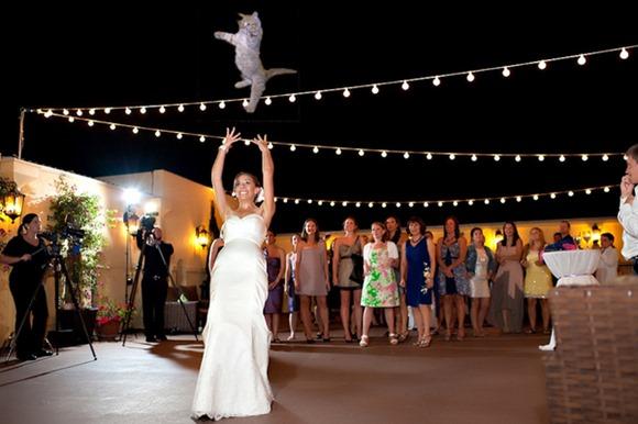 bridesthrowingcats5