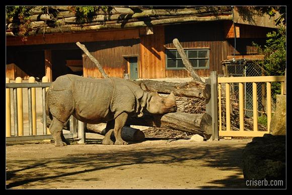 zoo-viena-01