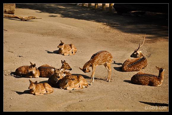zoo-viena-02