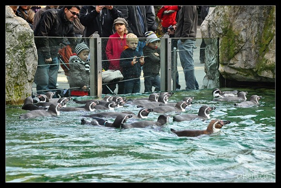 zoo-viena-09