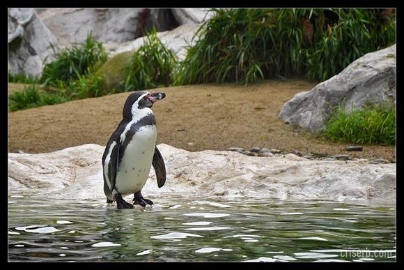 zoo-viena-11