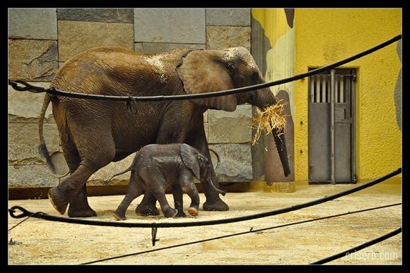 zoo-viena-12