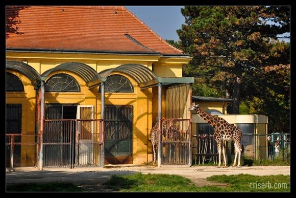 zoo-viena-17