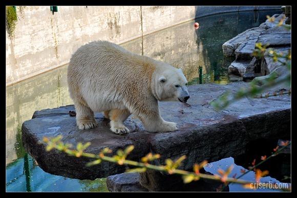 zoo-viena-19