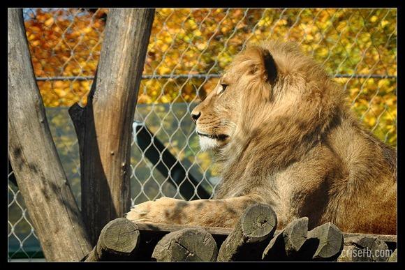 zoo-viena-21