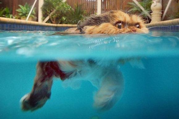 Swin_cats_06