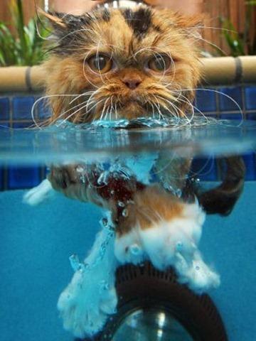 Swin_cats_08