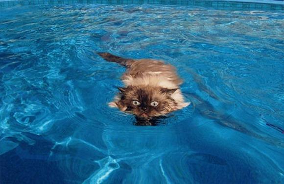 Swin_cats_25