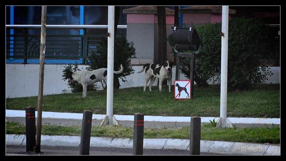 interzis-cainilor
