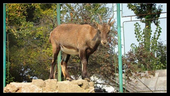 zoo_targoviste_11