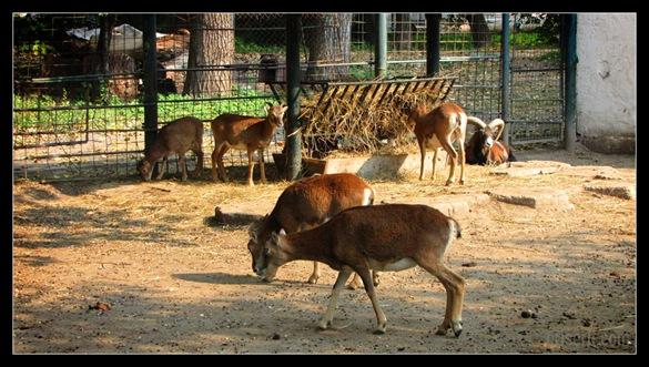 zoo_targoviste_12