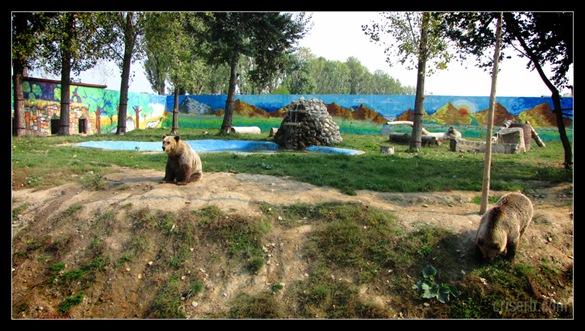 zoo_targoviste_15