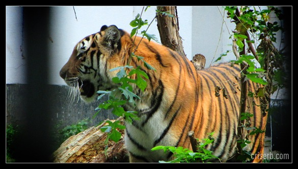 zoo_targoviste_23