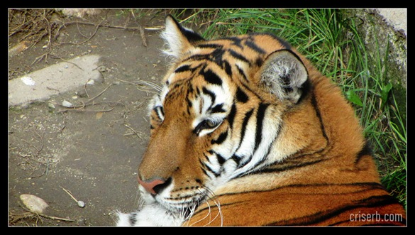 zoo_targoviste_27