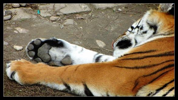 zoo_targoviste_28