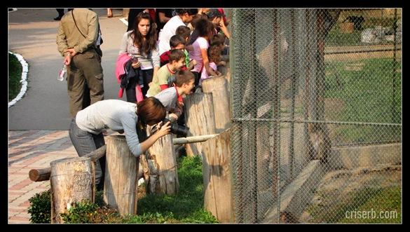 zoo_targoviste_33