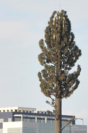 copacul-misterios1
