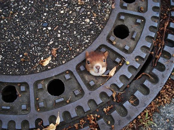 YE Germany Slippery Squirrel